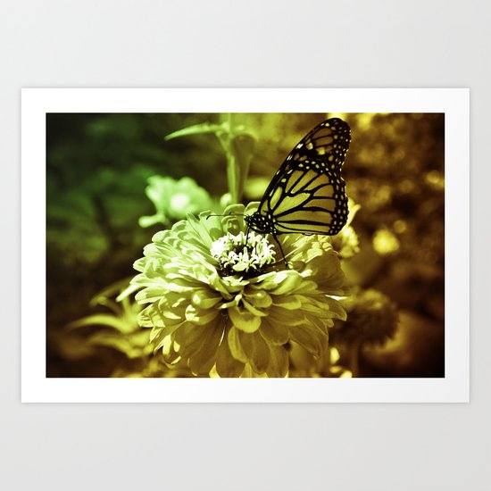 Butterfly on Flower - Color Art Print