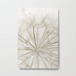 Dandelion Neutral Closeup Metal Print