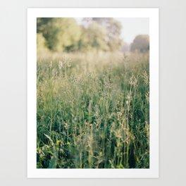 Field of green grass Art Print