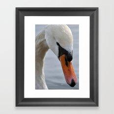 Swan portrait 2 Framed Art Print