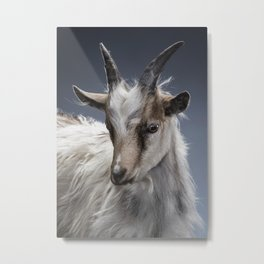 White and brown baby goat Metal Print