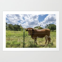 Brown Longhorn cow standing behind barbed wire fence Art Print