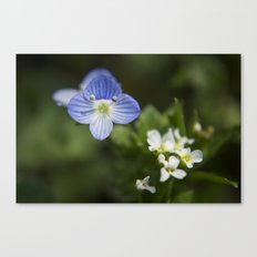 Don't forget me Canvas Print