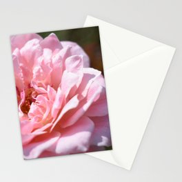 Rose Delight Stationery Cards