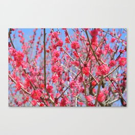 Japanese Spring #1 Canvas Print