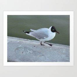 Dancing gull Art Print