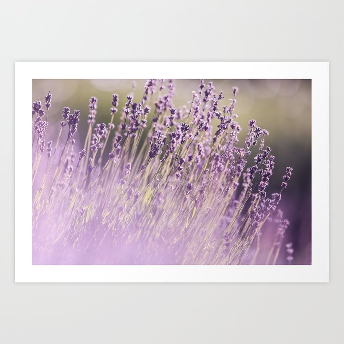 Spring Purple II Art Print