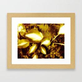 hosta3 Framed Art Print