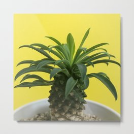 Euphorbia hypogaea(yellow) Metal Print