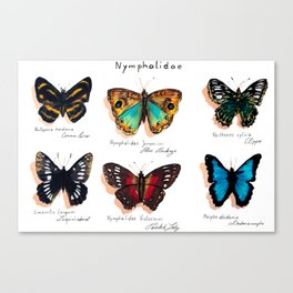 Nymphalidae butterflies Canvas Print