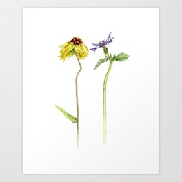 Black-Eyed Susan and Thistle Watercolor Art Print