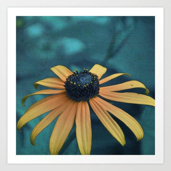 Black-eyed Susan Art Print