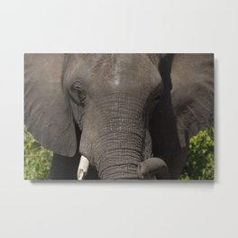 Elephant Detail Metal Print