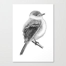 Empidonax The Bird Canvas Print