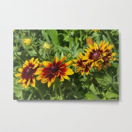 Denver Daisy Metal Print