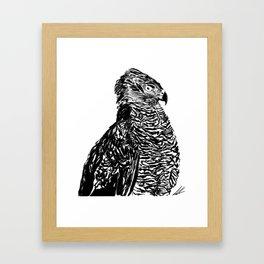 A Swift Eye Framed Art Print