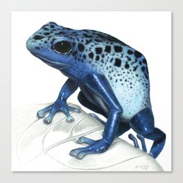 Blue Poison-Dart Frog Educational Layout Canvas Print