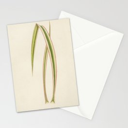 Dagger Plant (Yucca Aloifolia Variecata) engraved by Benjamin Fawcett (1808-1893) for Shirley Hibber Stationery Cards