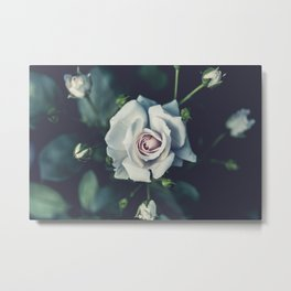 FLOWER - ROSE - WHITE Metal Print