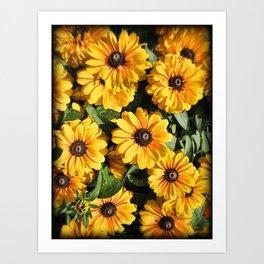 Abundance ~ Yellow Coneflowers / Black-eyed Susans against a Textured Background ~ Vintage Photo Art Print