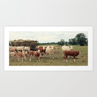 cows Art Prints featuring Cows by Falko Follert Art-FF77