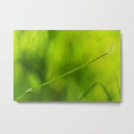 "Little ""Hyla molleri"" in its swamp at sunrise Metal Print"