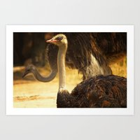 ostrich Art Prints featuring Ostrich by Unfocussed