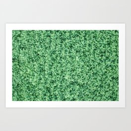 Nature print, Green rapeseed agriculture field Top View. Rapeseed. Art Print