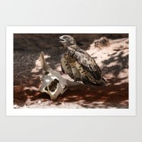 hawk Art Prints featuring Hawk by Veronika