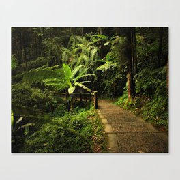 Tropical Forest Path Canvas Print