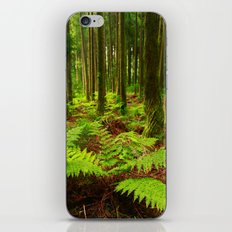 Ferns in the forest iPhone & iPod Skin