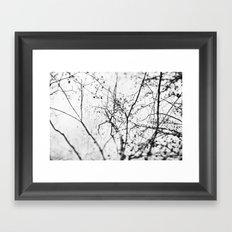 looking up . v Framed Art Print