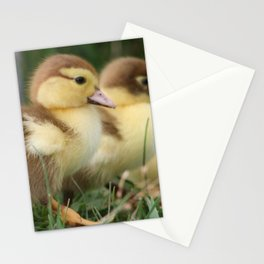 March of the Baby Ducks Stationery Cards