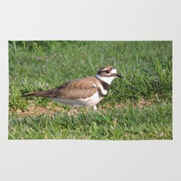 Killdeer Browsing Rug