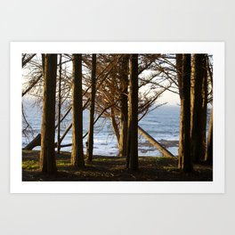 California Redwoods Art Print