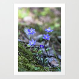 Anemone in forest Art Print