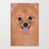 pomeranian Canvas Prints featuring Pomeranian by Pancho the Macho