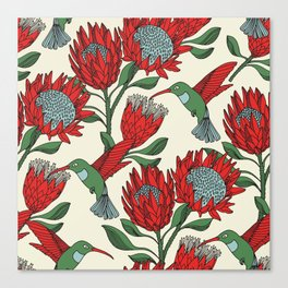 Protea with Hummingbird / Sunbird (Cream) Canvas Print