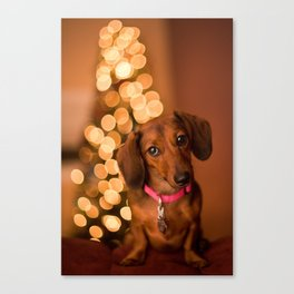Dachshund Christmas Canvas Print