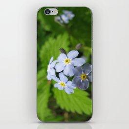 USA - MINNESOTA - Forget-me-nots iPhone Skin