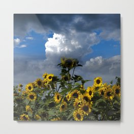 sunflowers and clouds -1- Metal Print