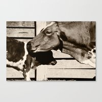 cows Canvas Prints featuring Cows by Ana Francisconi