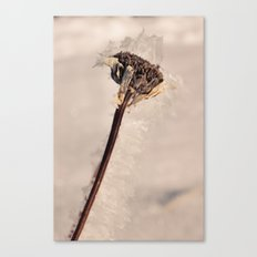 Frostbite Canvas Print