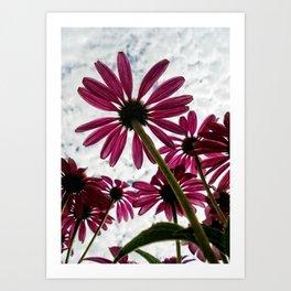Pink Coneflower Daisy Art Print
