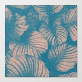 Morning flora Canvas Print