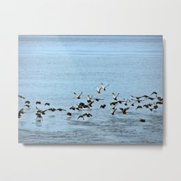 Flock Off Metal Print