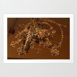 drying oregano Art Print