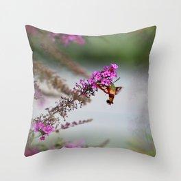 Hummingbird Sphinx Moth in Phlox Throw Pillow