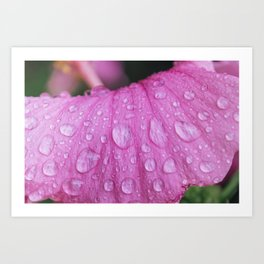Rain Drops on Flower - Plant Photography Art Print