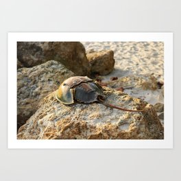 Horseshoe Crab Art Print